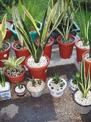 Φυτά εσωτερικού χώρου  και οι ωφέλειές τους