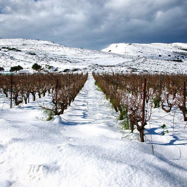Lyrakiswines - Vineyards
