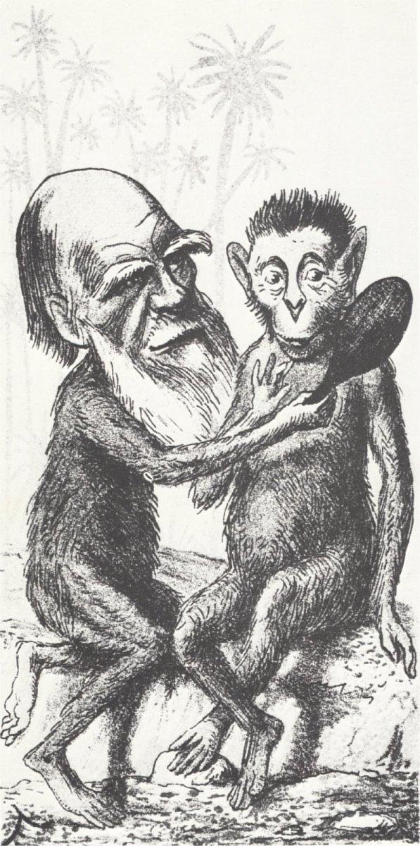 darwin_monkey_1