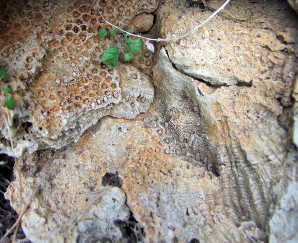 Χώρος λατρείας και κοράλλια απολιθωμένα
