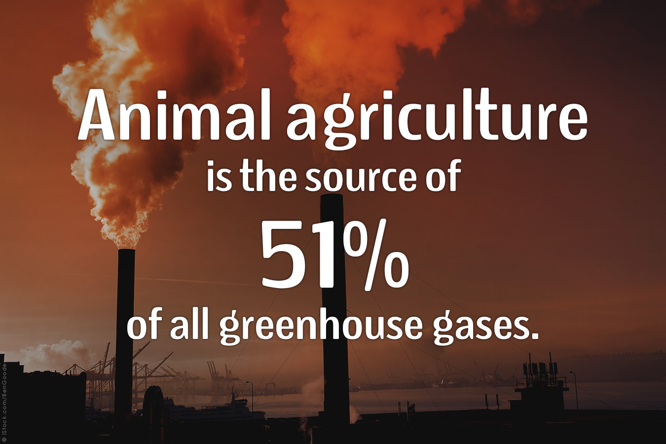Animal-Agriculture-Source-Greenhouse-Gasses-PETA