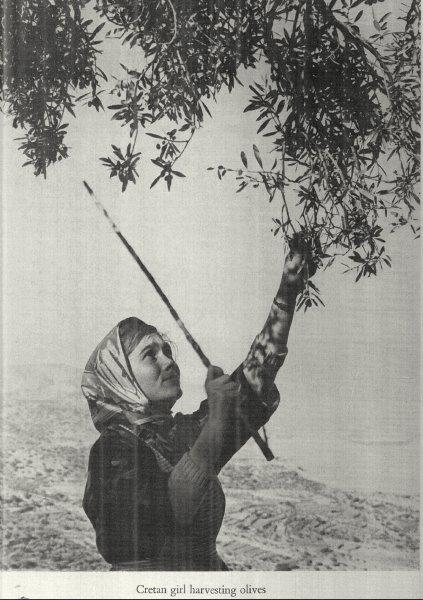 Winds of Crete....1974 by David MacNeil Doren