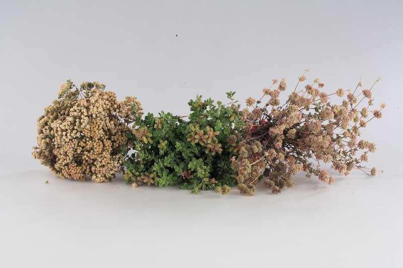 Από το Δίκταμο ως το Τίλιο και τη Λαδανιά, όλα τα αρωματικά Φυτά και Βότανα της Κρήτης και οι ευεργετικές ιδιότητές τους