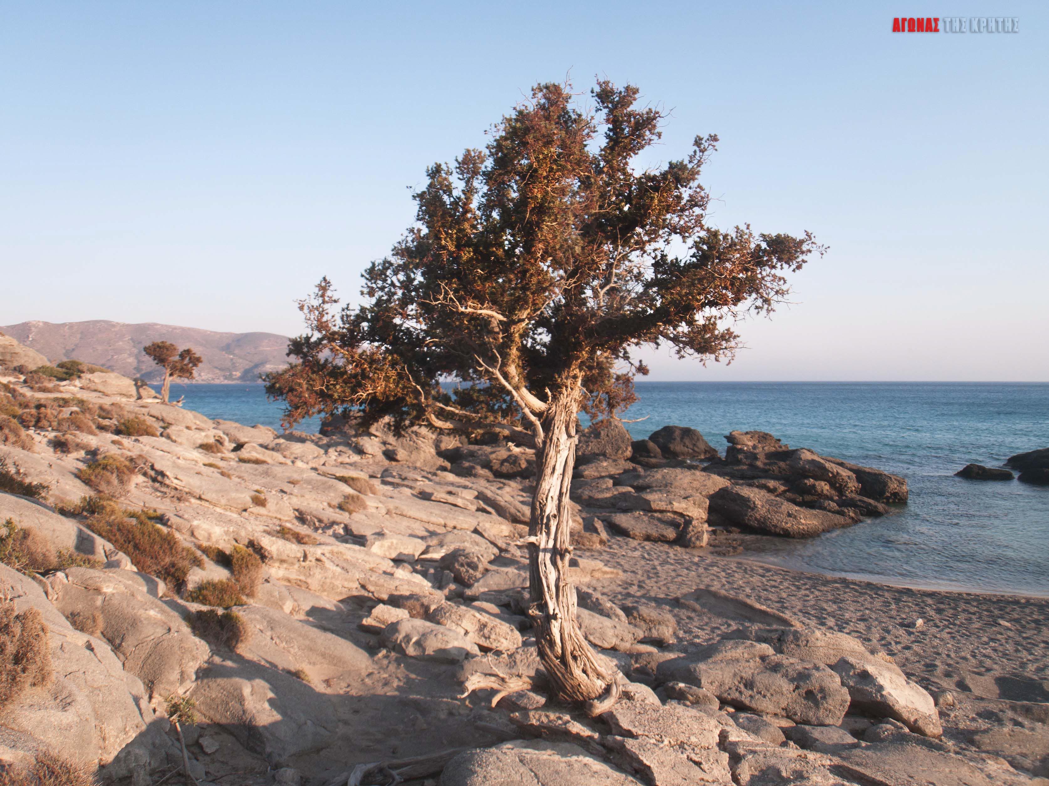 Κεδρόδασος: Ένας επίγειος παράδεισος που για να συνεχίσει να υπάρχει θα πρέπει να τον σεβόμαστε | Φωτός