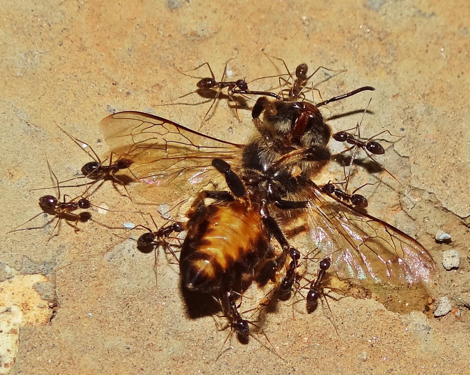 Ο θάνατος των μελισσών