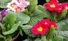 Το… θαυματουργό «Λουλούδι του Δαρβίνου» στην περιοχή του Γράμμου κοστίζει έως και 50.000 ευρώ το κιλό