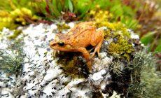 Απώλεια βιοποικιλότητας: Αδιάφορο θέμα; Δεν είναι!