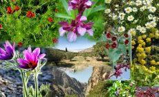 Ελλάδα, η χώρα με την πιο σπάνια και πλούσια χλωρίδα στην Ευρώπη