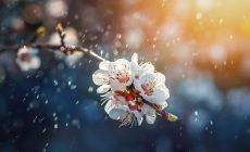 """""""Στων αμαρτωλών τη χώρα, το Μαγιόπουλο χιονίζει"""": 8 παροιμίες για τον κακό καιρό τον Μάη"""