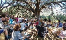 Σχολεία κάτω απ΄τα δέντρα: Όλα όσα πρέπει να ξέρετε για τη Δημοκρατική Παιδεία με αφορμή το συνέδριο που διοργανώθηκε στην Κρήτη