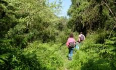 Μια ζούγκλα δίπλα στα Χανιά – Το Φαράγγι των Μποριανών | Φωτός