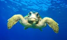 100 περιβαλλοντικές οργανώσεις κατά Γιούνκερ