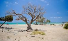 Nέο ντοκιμαντέρ για το Δίκτυο Natura 2000 στην Κρήτη και τη σημασία του για τη διατήρηση του περιβάλλοντος και την ευημερία | Βίντεο