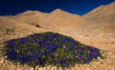 Παγκόσμια πρωτιά:  Η Δυτική Κρήτη αποτελεί ένα πραγματικό βοτανικό παράδεισο. Περισσότερα από 1.500 είδη και υποείδη φυτών | Φωτός