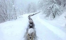 Το μονοπάτι των προβάτων μέσα στα χιόνια και άλλες 12 εκπληκτικές φωτογραφίες από τη χιονισμένη Κρήτη | Φωτός