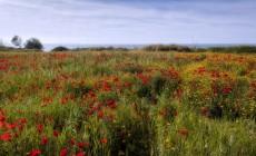 Η ανοιξιάτικη Κρήτη μέσα από 15 πανέμορφες φωτογραφίες