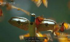 Κολίμπρι-ρομπότ απαθανατίζει εκατομμύρια πεταλούδες | Βίντεο