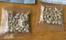 Κρήτη: Στέλνουν πακέτα με παράξενους σπόρους σε πολίτες – Τι είχε συμβεί στις ΗΠΑ