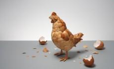 «Μιλώντας για αβγά!»: Οι επιστήμονες του Μουσείου Φυσικής Ιστορίας απαντούν στα πάντα σχετικά με τα αυγά