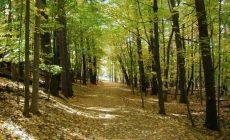 Με ένα τρισεκατομμύριο καινούργια δέντρα θα μπορούσαμε να «φρενάρουμε» την κλιματική αλλαγή