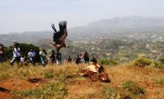 Eκδήλωση περιβαλλοντικής εκπαίδευσης και απελευθέρωση πέντε όρνεων στη φύση από το Μουσείο Φυσικής Ιστορίας Κρήτης