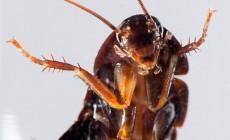 Απαλλαγείτε μια για πάντα από τις κατσαρίδες με τον πιο φυσικό τρόπο