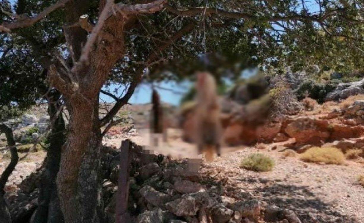 52χρονος κτηνοτρόφος ο δράστης του αποτρόπαιου βασανισμού δύο σκύλων στα Κεραμιά