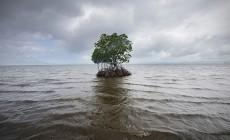 Ο ρυθμός ανόδου της στάθμης της θάλασσας έχει σχεδόν τριπλασιαστεί από το 1990